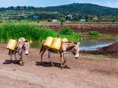 Kenya bans donkey slaughterhouses to curb theft
