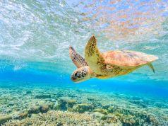 Green Turtle babies hatch along Kenya's Southern coastline