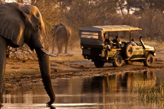 What to know about Safaris in Africa on a budget