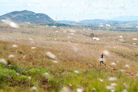 A locust crisis in Africa amidst a global pandemic