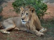 Conservation plan for Ethiopia's wild animals