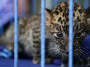 Wild animals smuggled from Tanzania to Pakistan