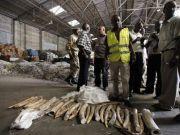 Major ivory seizure in Nairobi