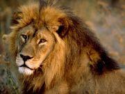 Six lions killed in Nairobi