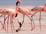 Arusha hosts major conference on birds