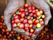 International coffee conference in Addis Ababa