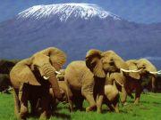 Climbing mount kilimanjaro trips, trek offers