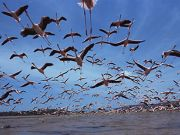 Lake Natron expects good year for flamingos