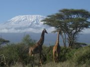 Climbing mount kilimanjaro, trekking expeditions Tanzania