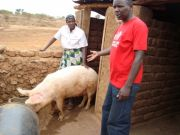 Swine fever outbreak in Arusha