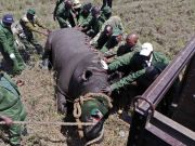 Investigation into rhino killing in Nairobi