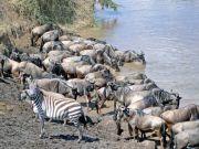 Serengeti road case in court