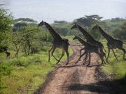 Tanzania to build airport near Serengeti National Park