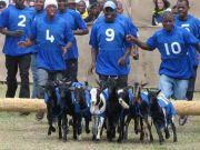 Goat Races