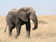 Tanzania steps up fight against poachers