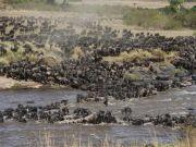 Serengeti saved