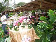 Ghana Garden and Flower show