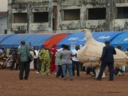 African crops and cultural festival