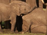 Arusha to open baby elephant orphanage