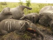 Tanzania jails Chinese poachers for 20 years