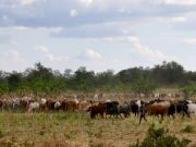 Tanzania orders foreign livestock to leave Arusha region