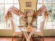 Best Safaris in Kenya